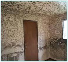 Mold room